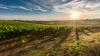 Виноделы просят ввести госпошлины на ввоз импортного ...