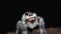 В моноблоке от Apple под экраном поселился паук
