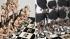 """Прокуратура проверит Эрмитаж из-за """"кощунственной"""" выставки братьев Чепмен"""