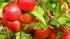 Россельхознадзор запретил импорт польских овощей и фруктов с 1 августа
