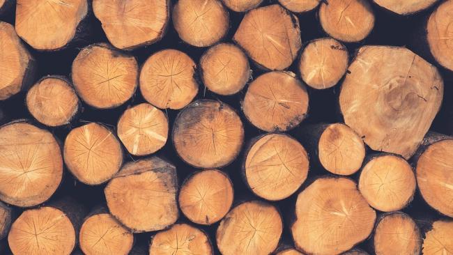 В России ужесточили правила экспорта древесины