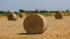 Власти выделят на инвестиционные проекты в агрокомплексы 5,2 млрд рублей