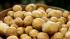 Белоруссия отказалась от украинского картофеля