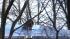 Власти Петербурга обещают закончить ремонт крыш до 1 сентября