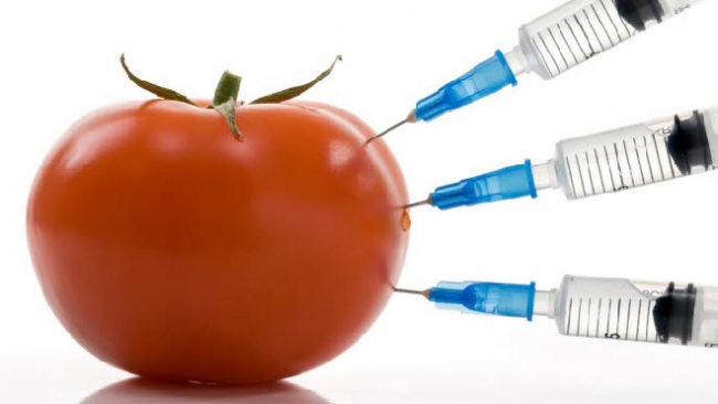 Правительство РФ хочет запретить продажу продуктов с ГМО