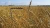 Госрегистрация ГМО в РФ откладывается на 3 года