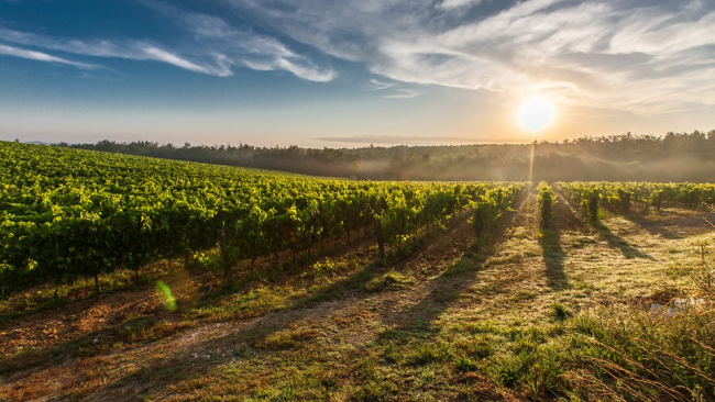 Виноделы просят ввести госпошлины на ввоз импортного вина