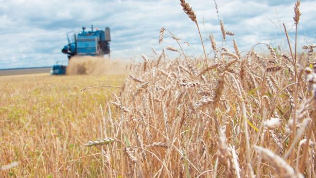 В РФ собрали 92,4 млн тонн зерна в 2013 году