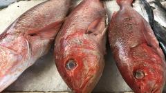 Красная рыба подешевела на оптовом рынке