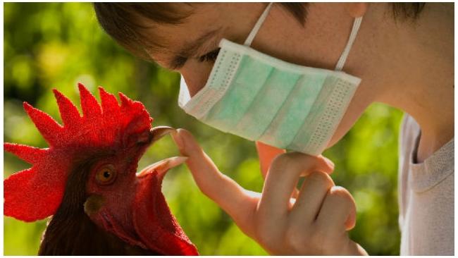 Россельхознадзор приостановил поставки мяса птицы из США