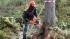 В России появится единая система учета древесины и сделок по ней