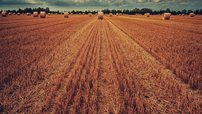 WSJ: Российская пшеница пугает американский экспорт