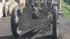 Специалисты Невского ССЗ реставрируют пушку, затонувшую в октябре 1941 года