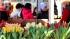 ФАС проверит рост цен на цветы перед 8 марта