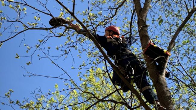 Спасатель «Кошкиспаса» рассказала, как бригады спасают животных