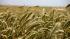 Экспорт российской сельхоз продукции достигнет $30 млрд через восемь лет