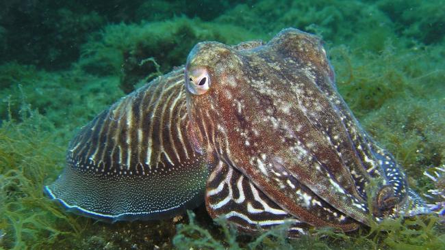 Ученые изучили действие экстази на осьминогов