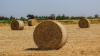 Власти выделят на инвестиционные проекты в агрокомплексы ...