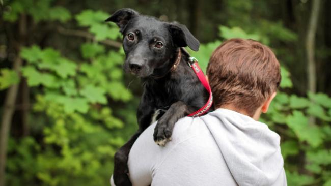 Петербургский приют для собак собирает 200 тысяч рублей на корм