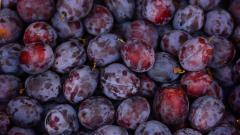 Аграрии России в 2020 г. собрали рекордный урожай ягод и плодов – 3,6 млн тонн