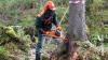 В России появится единая система учета древесины и сдело...