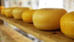 В России могут запретить немолочный сыр