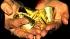 Золотовалютные резервы России возросли на 2 млрд долларов