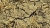 Прогноз по урожаю зерновых снижен из-за засухи