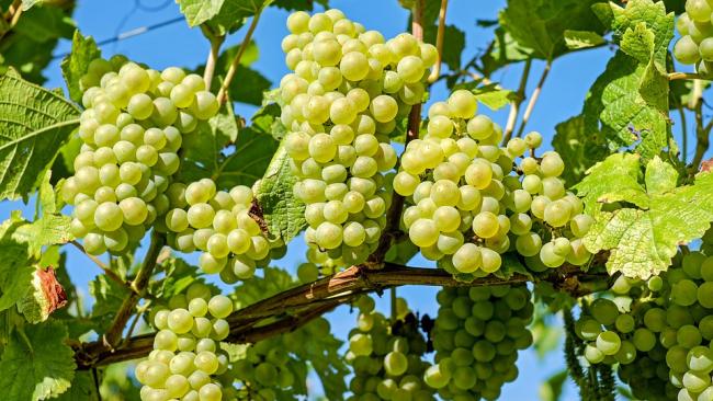 Власти планируют ввести минимальную цену на вино
