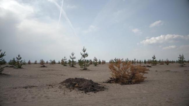 Петербуржцы обеспокоены судьбой парка на Василеостровском намыве