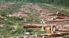 В Новгородской области вырубят 1200 га леса для строител...