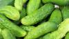 Минсельхоз зафиксировал снижение цен на ряд овощей