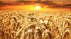 Минсельхоз предложил ввести квоты на экспорт зерна