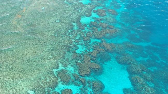 """В Австралии назвали """"цену"""" Большого барьерного рифа"""