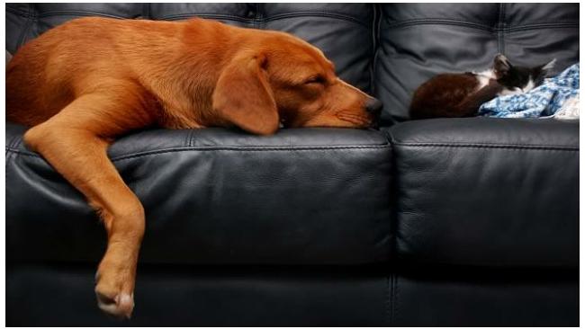 Госдума РФ не одобрила введения налога на собак