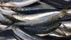 Показатель рыбной промышленности вырос на 8,3% - мнение экспертов Росрыболовства