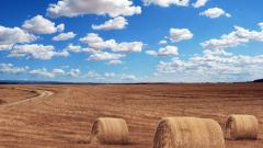 Правительство продаст 1,5 млн тонн зерна