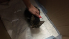 """Выяснились подробности смерти котенка в """"Институте кино и телевидения"""""""