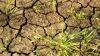 Засуха в США угрожает миру ростом цен на продовольствие