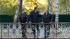 Виктор Янукович считает, что Украина переплачивает за российский газ