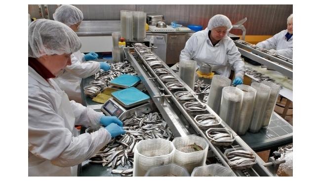 Россельхознадзор запретил импорт эстонской рыбной и молочной продукции