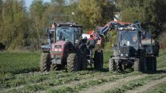 Ленобласть в 2020 г. увеличила сбор основных сельхозкультур