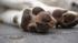 В Петербурге обнаружили трупы собак, которых не кремировали