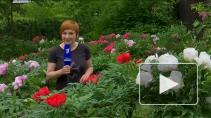 Цветущая экзотика: как живет Ботанический сад на каранти...