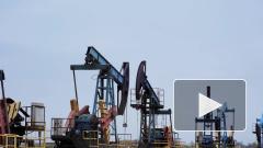 Россия может сократить добычу нефти на 1 млн баррелей в день