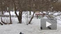 Как зимуют пернатые в наших краях? Неожиданные открытия петербургских орнитологов