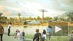 Строительство крупнейшего в Европе зоопарка начнут под Петербургом в 2013 году