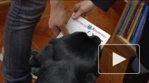 Канистерапия: как собаки-реабилитологи помогают людям?