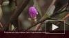 В Ботаническом саду очереди: цветут подснежники и ...