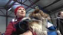 Собаки-спортсмены и танцоры - уже реальность